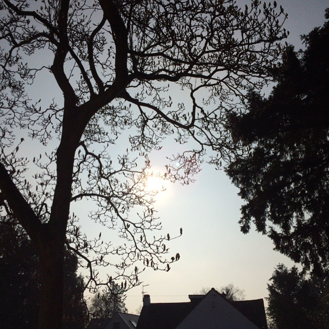 Sky, Spring, 365, 366