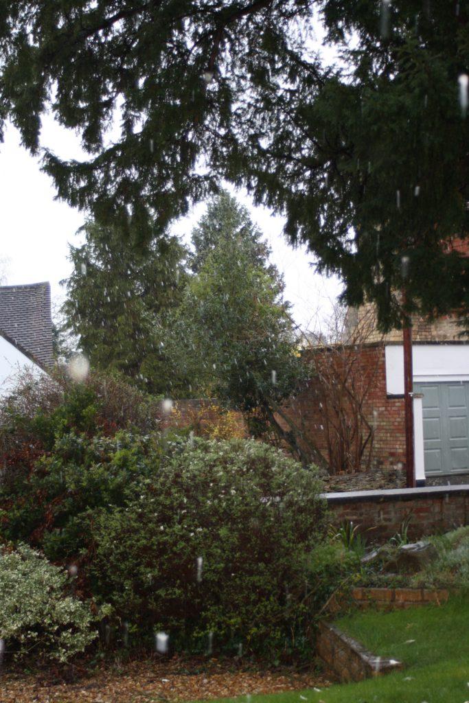 Weather, Snow, 365, 366