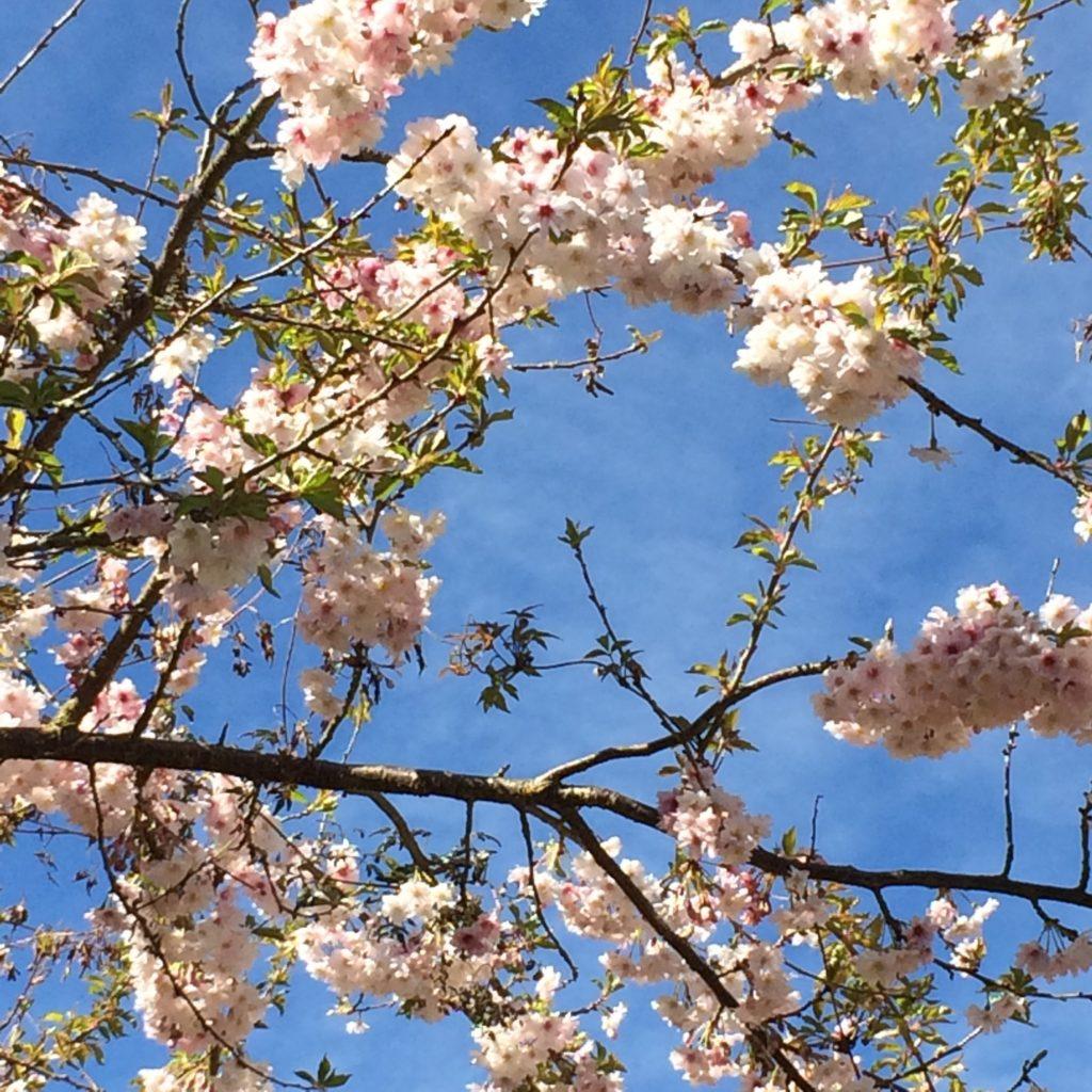 Blossom, Garden, 365, 366