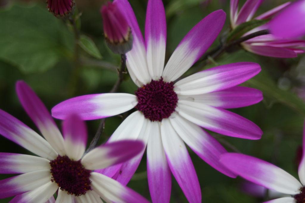 Flowers, Garden, 365, 366