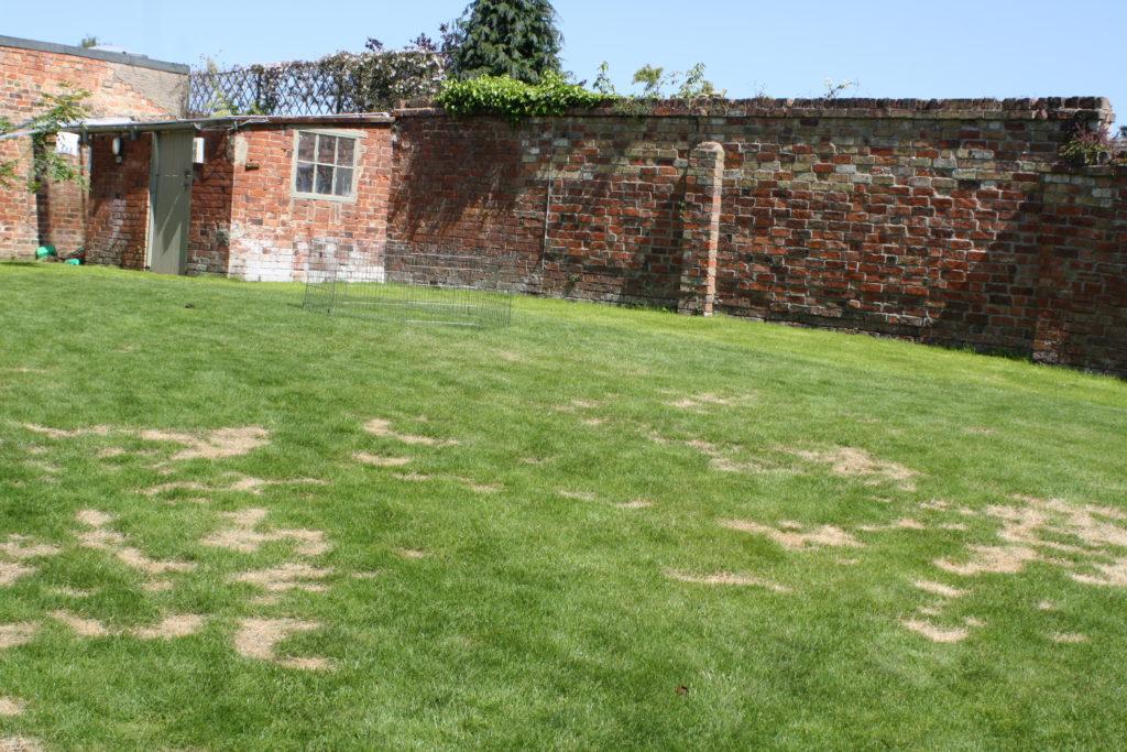 Garden, Lawn, Grass
