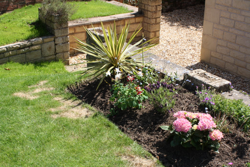 Garden, Plants, Flowers