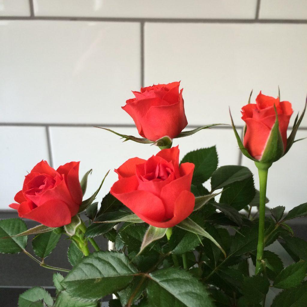 Flowers, Gift, Friend, 365, 366