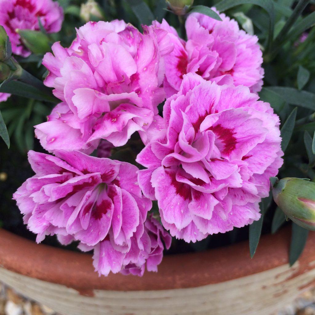 Garden, Flowers, 365, 366