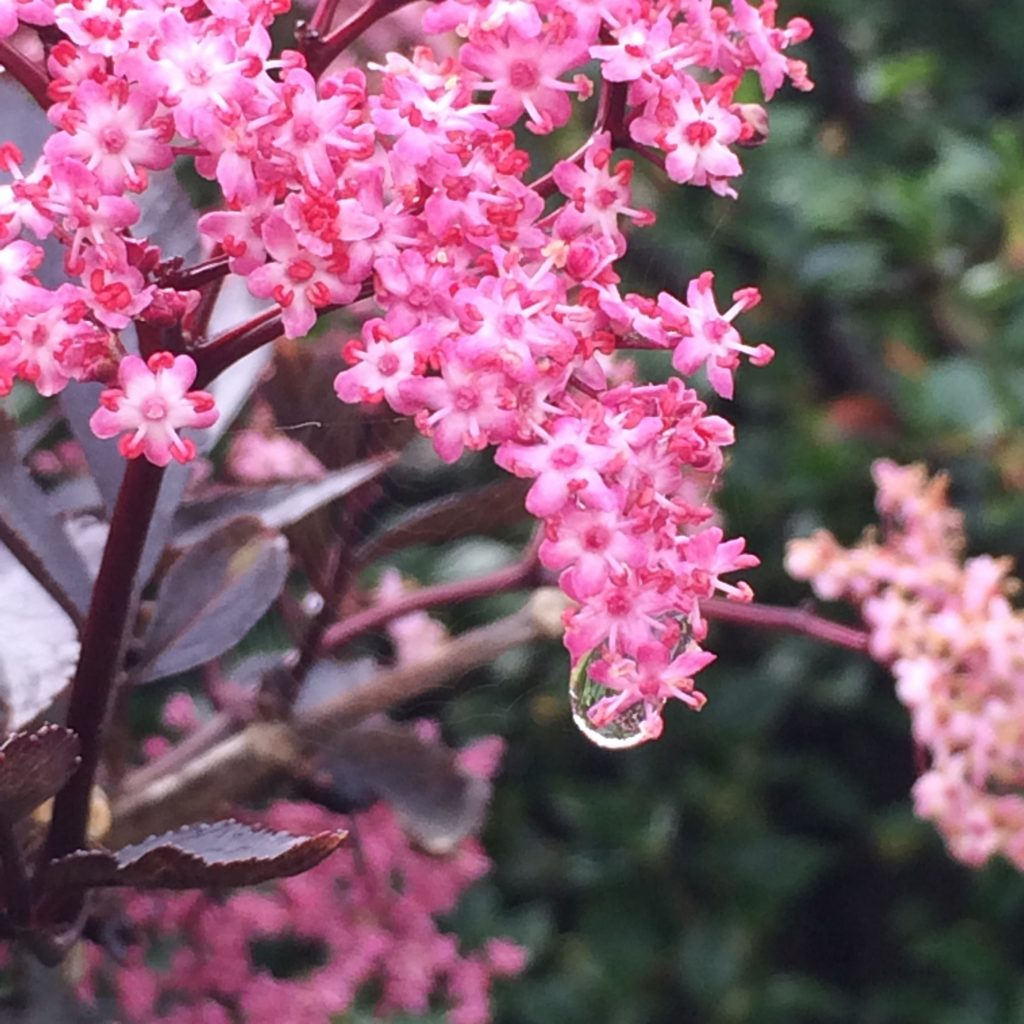 Blossom, Rain, 365, 366
