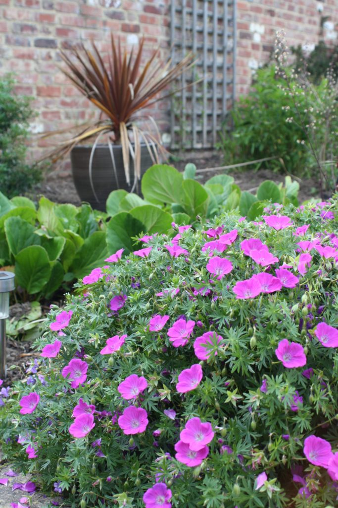 Garden, Flowers, Plants, 365, 366