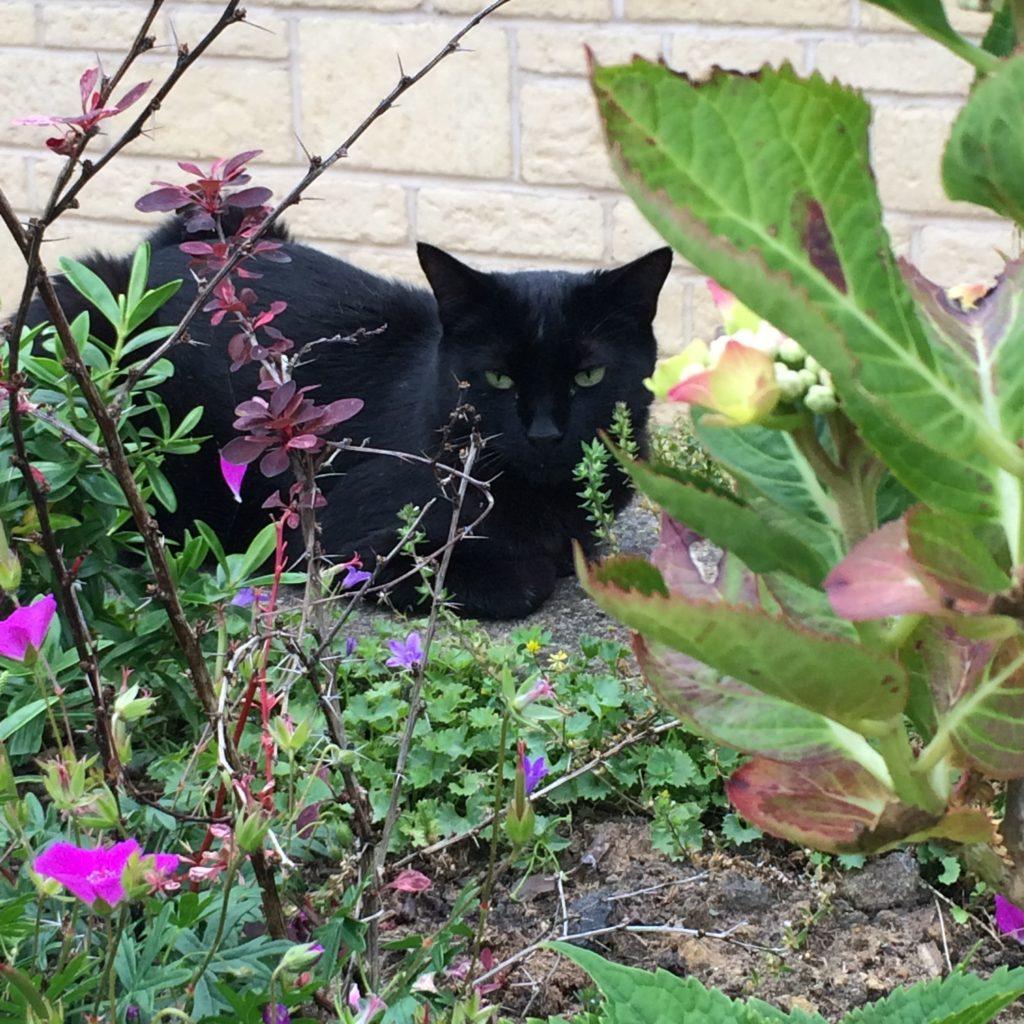 Cat, Garden, 365, 366