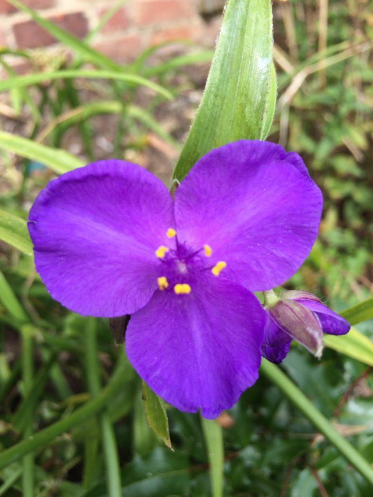 Flower, Garden, 365, 366