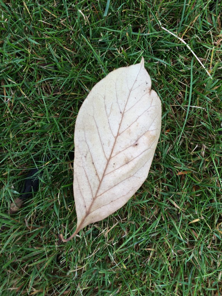 Leaf, Autumn, 365, 366