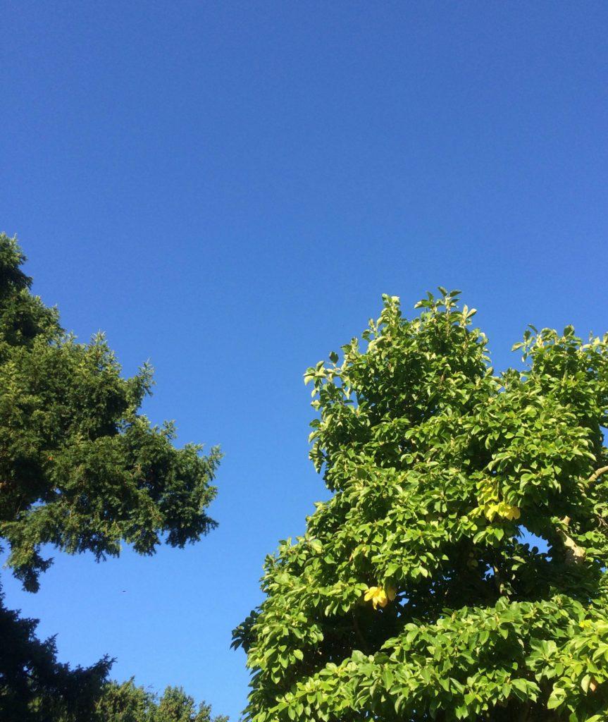 Sky, 365, 366