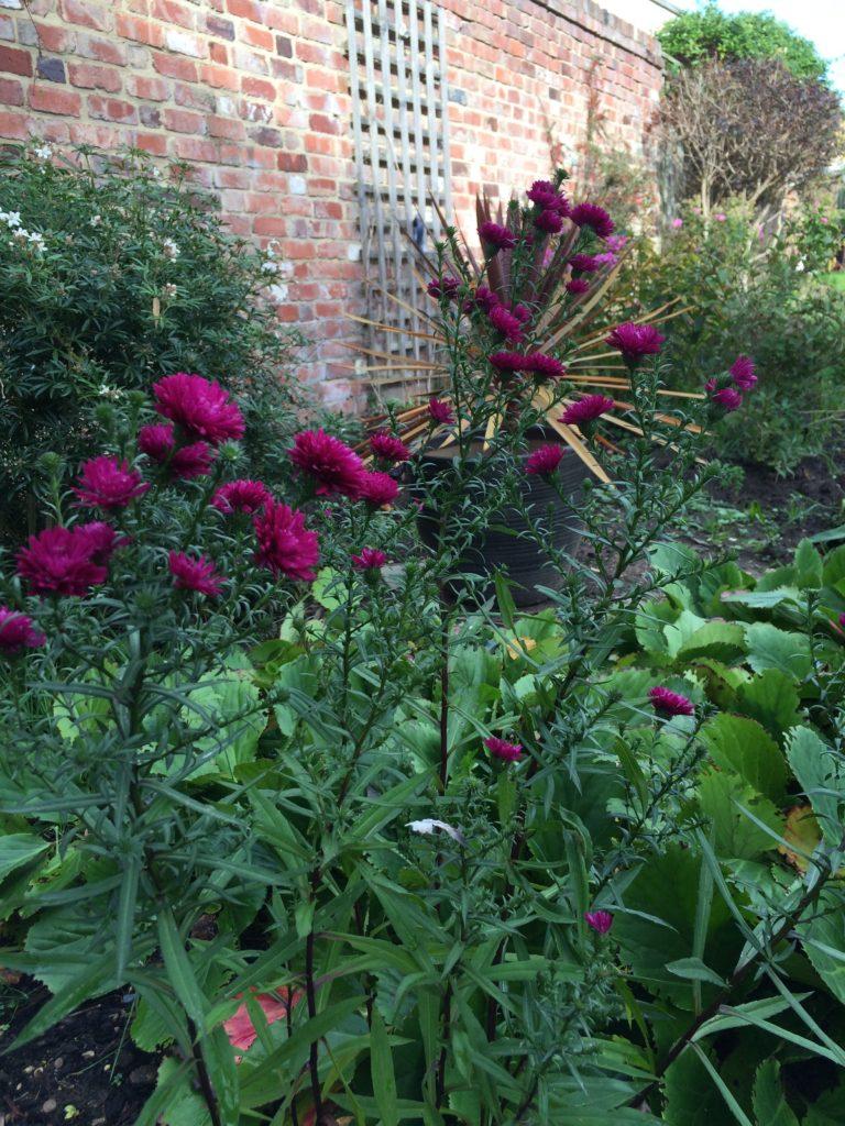 Flowers, Garden, Autumn, 365, 366