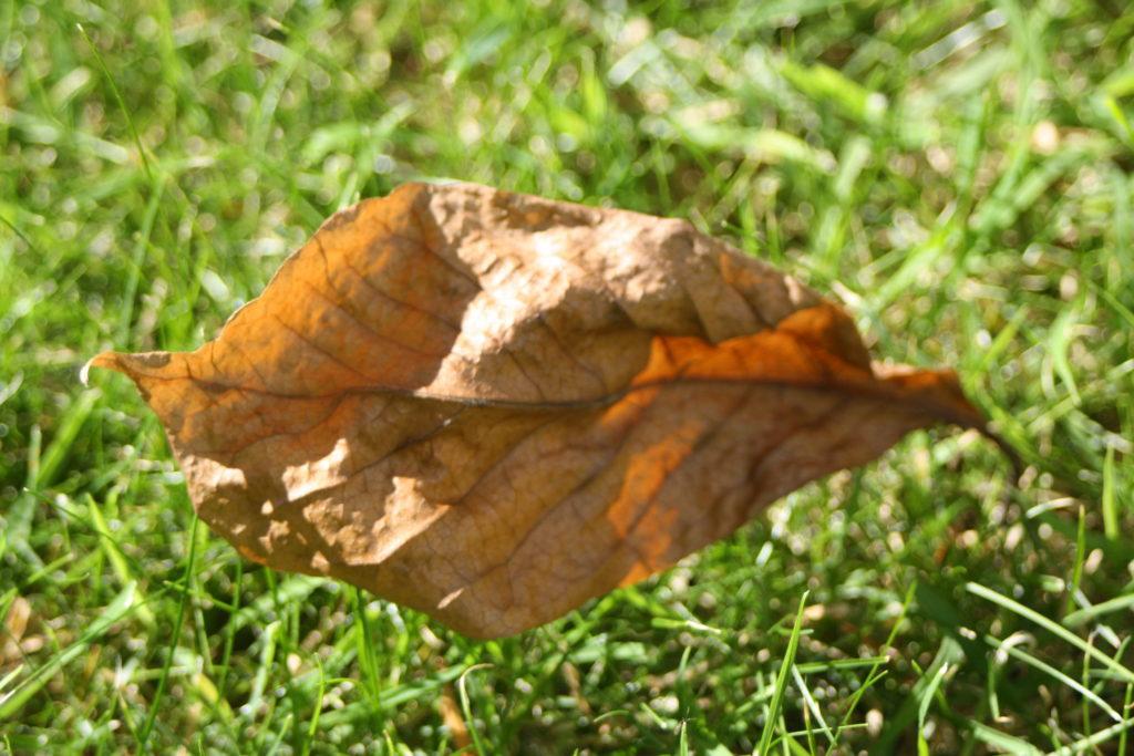 Leaf, Autumn, Garden, 365, 366
