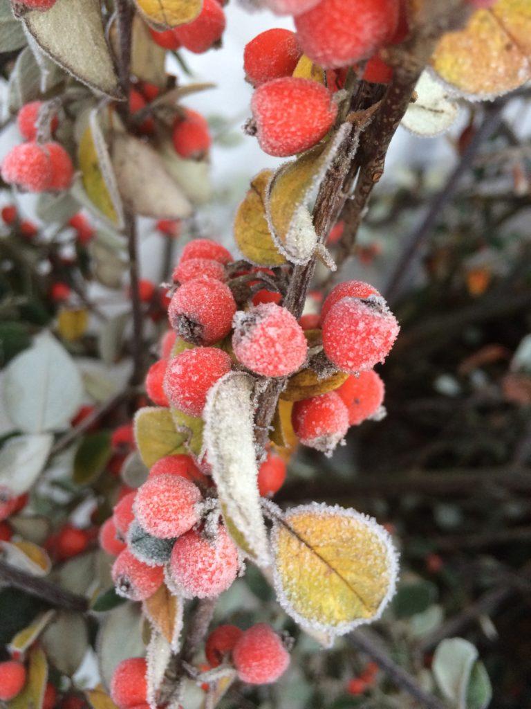Silent Sunday, My Sunday Photo, Winter, Frost