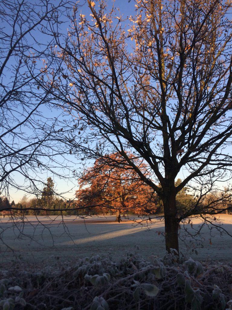 Frost, Winter, 365, 366