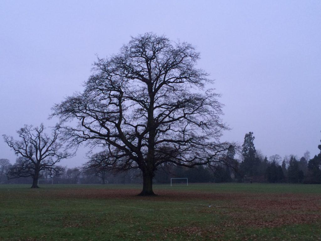 Trees, Winter, Silent Sunday, My Sunday Photo