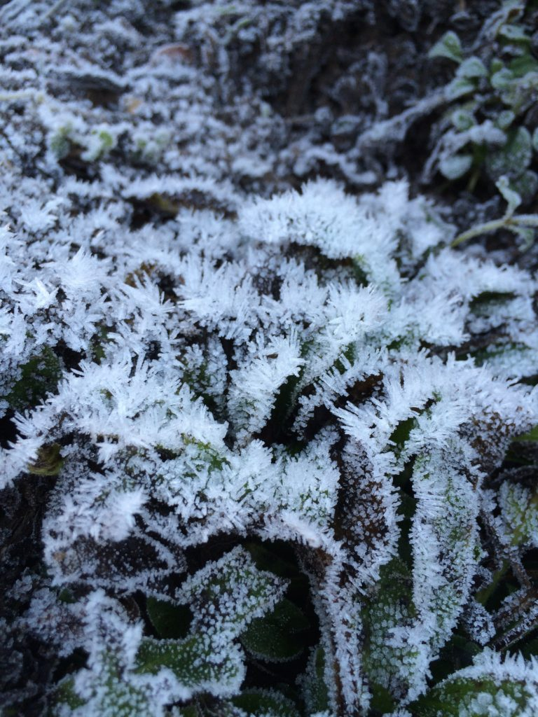 Frost, 365, 366