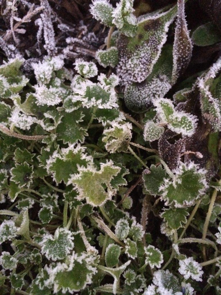 Frost, Winter, Garden, 365