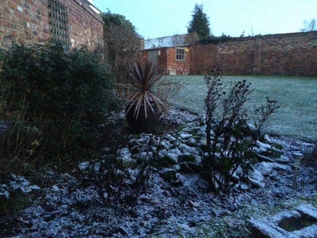 Garden, Snow, 365