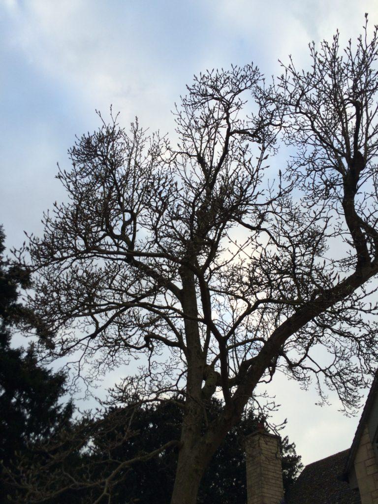 Sky, Winter, 365