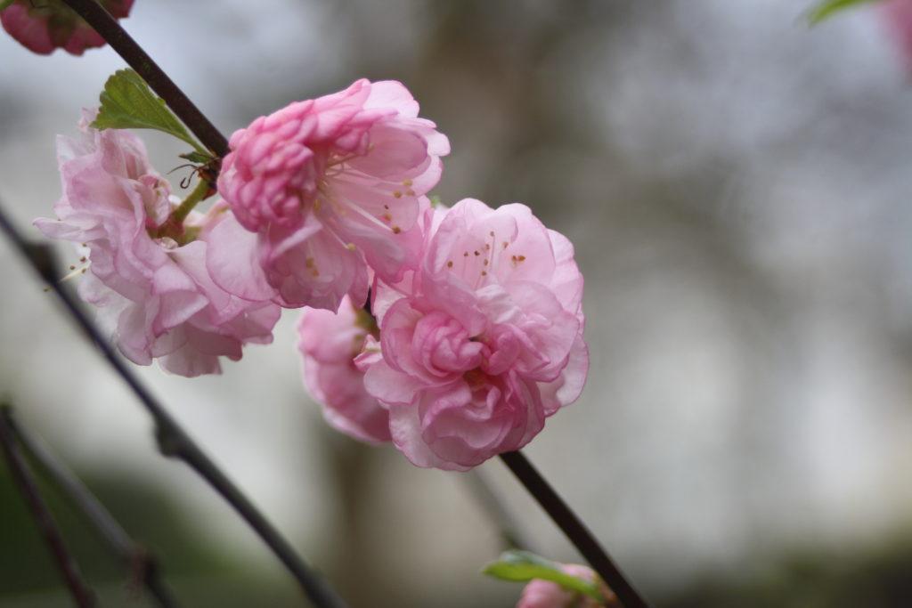 Blossom, Garden, Spring, 365