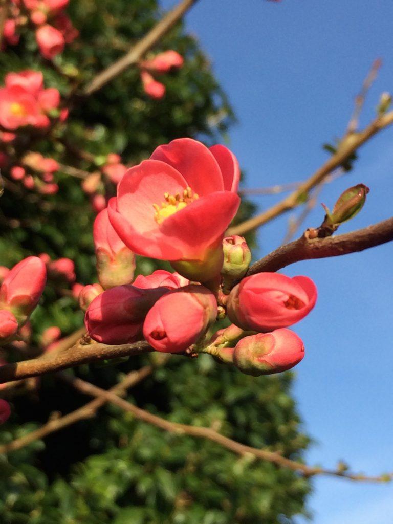 Blossom, Spring, 365