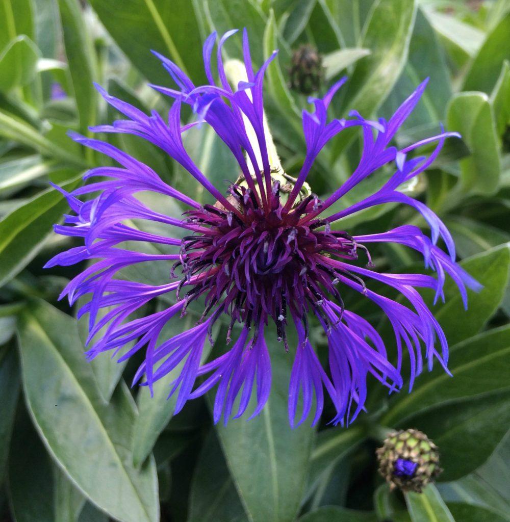 Flower, Garden, Spring, 365