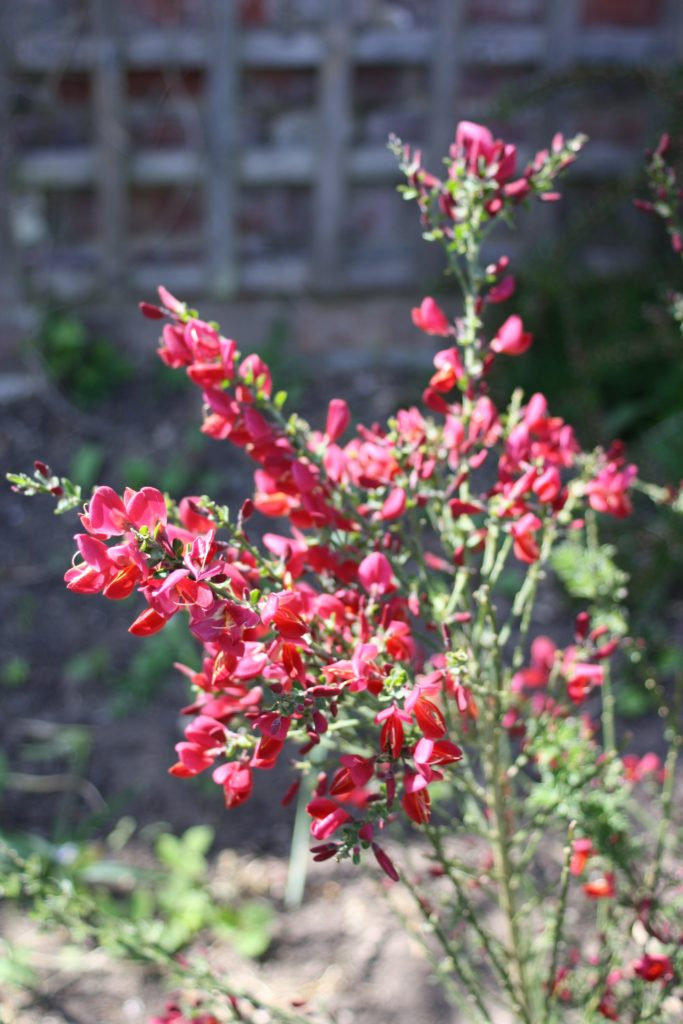 Blossom, Garden, Silent Sunday, My Sunday Photo