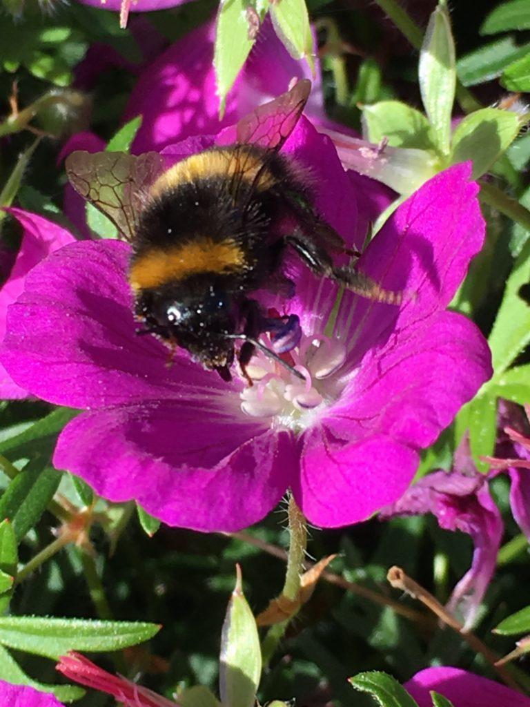 Bee, Flower, Garden, 365