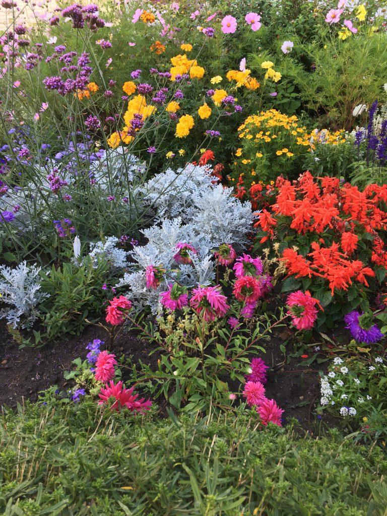 Garden, Flowers, 365