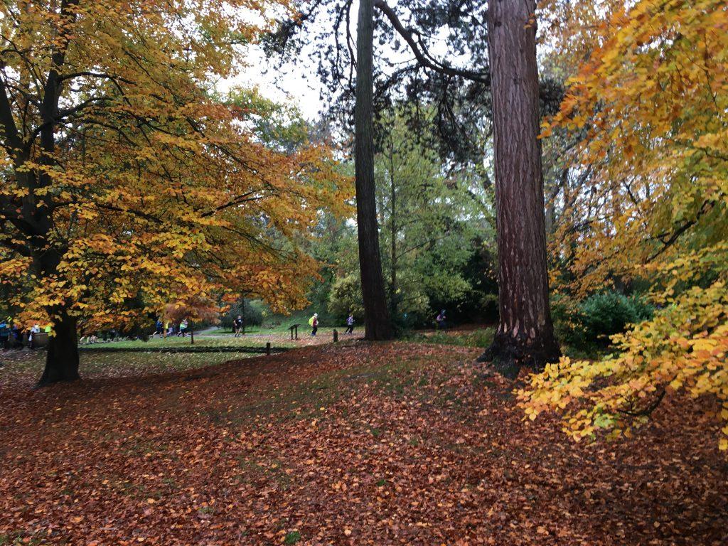 Autumn, Parkrun, Silent Sunday, My Silent Sunday