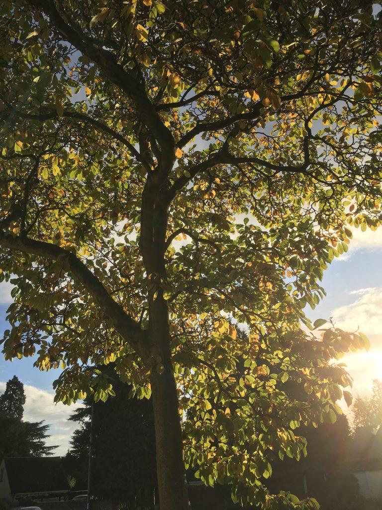 Autumn, Leaves, Tree, 365