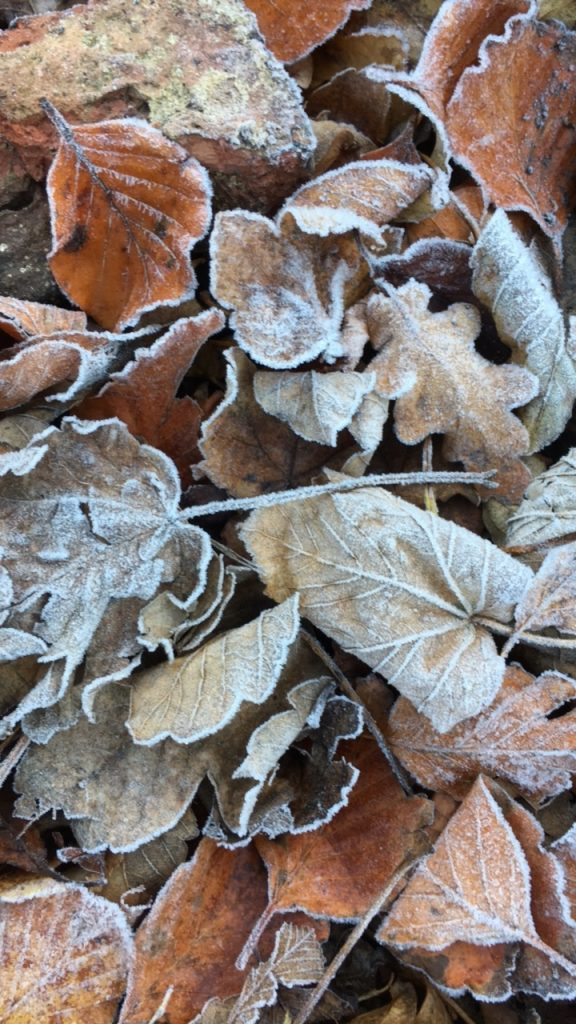 Autumn, Leaves, Frost, 365
