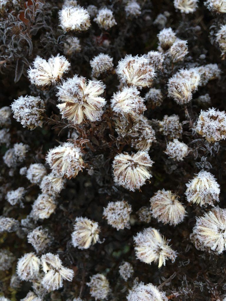 Garden, Frost, 365