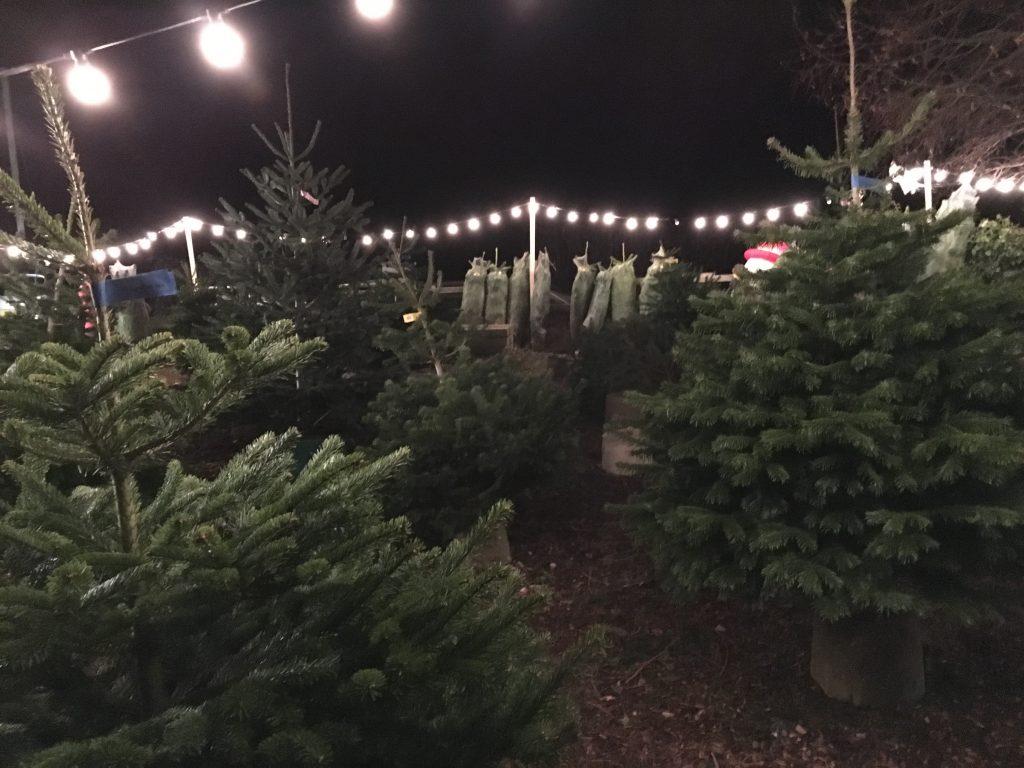 Christmas trees, Christmas, 365