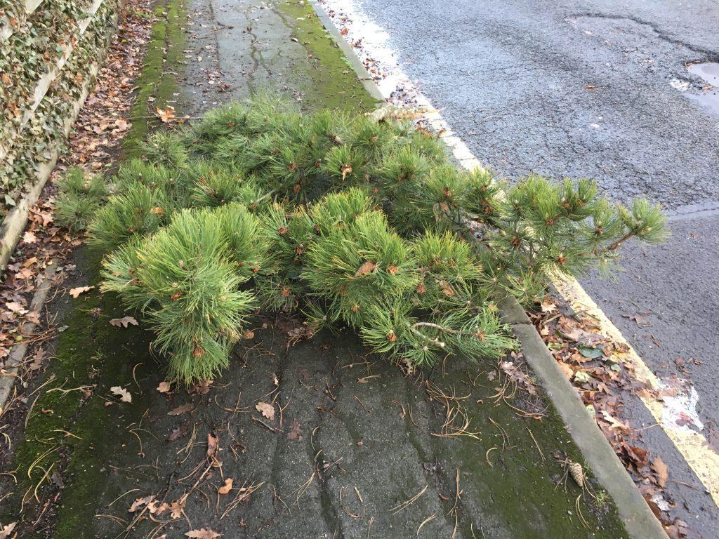 Tree, Branch, Storm Eleanor, 365