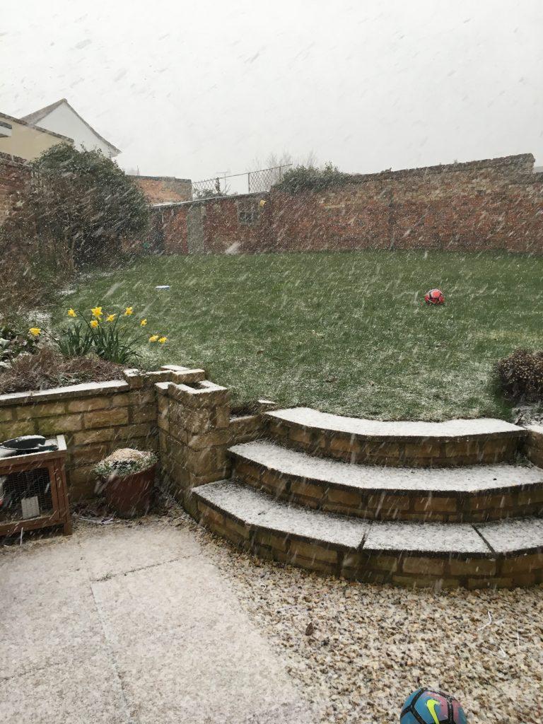 Snow, Garden, Weather, 365