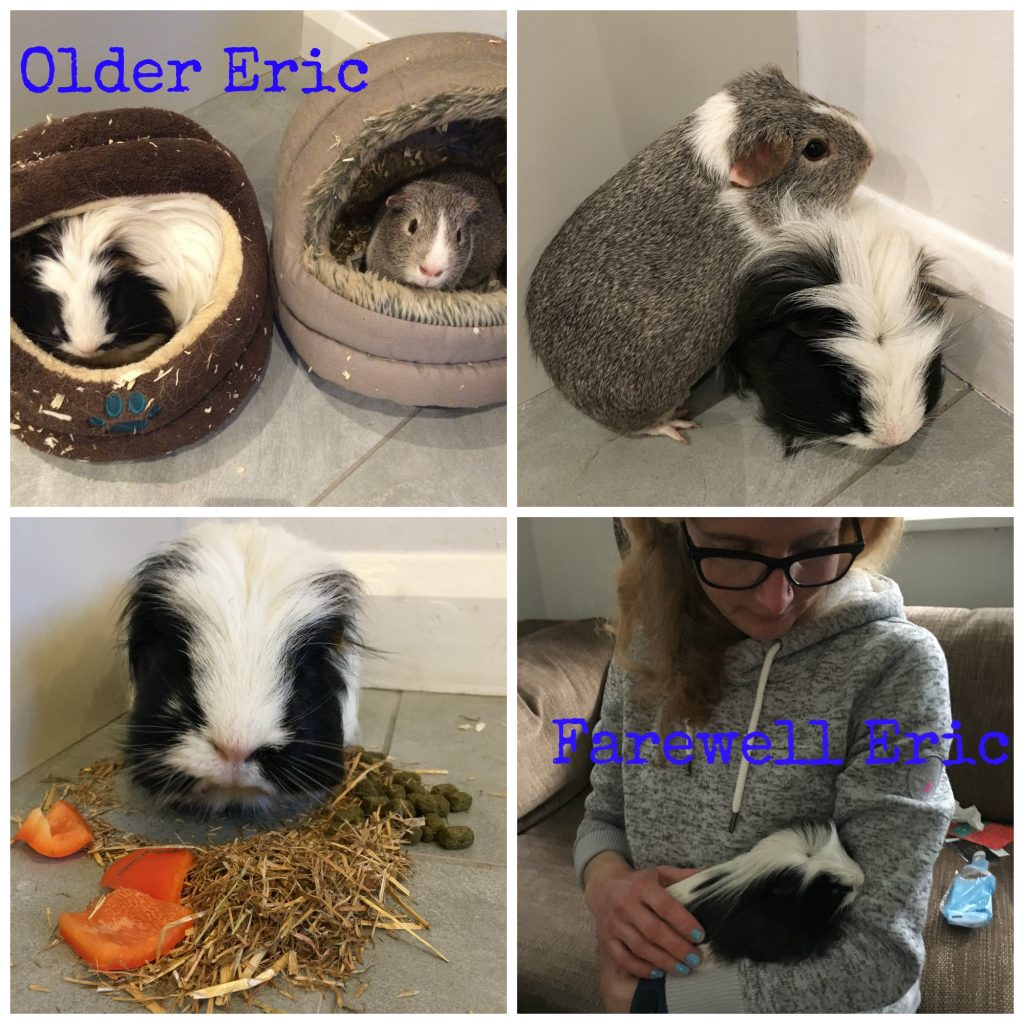 Eric, Eric the guinea pig, Farewell Eric, RIP Eric, Guinea pig, Pet