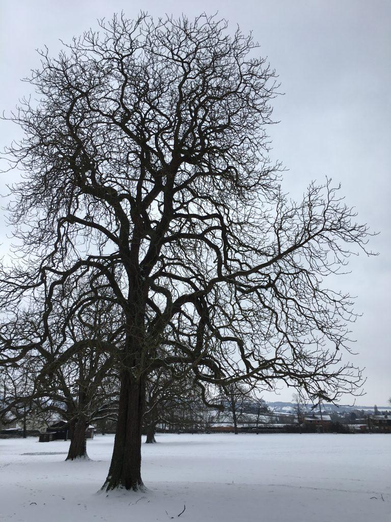 Trees, Snow, 365