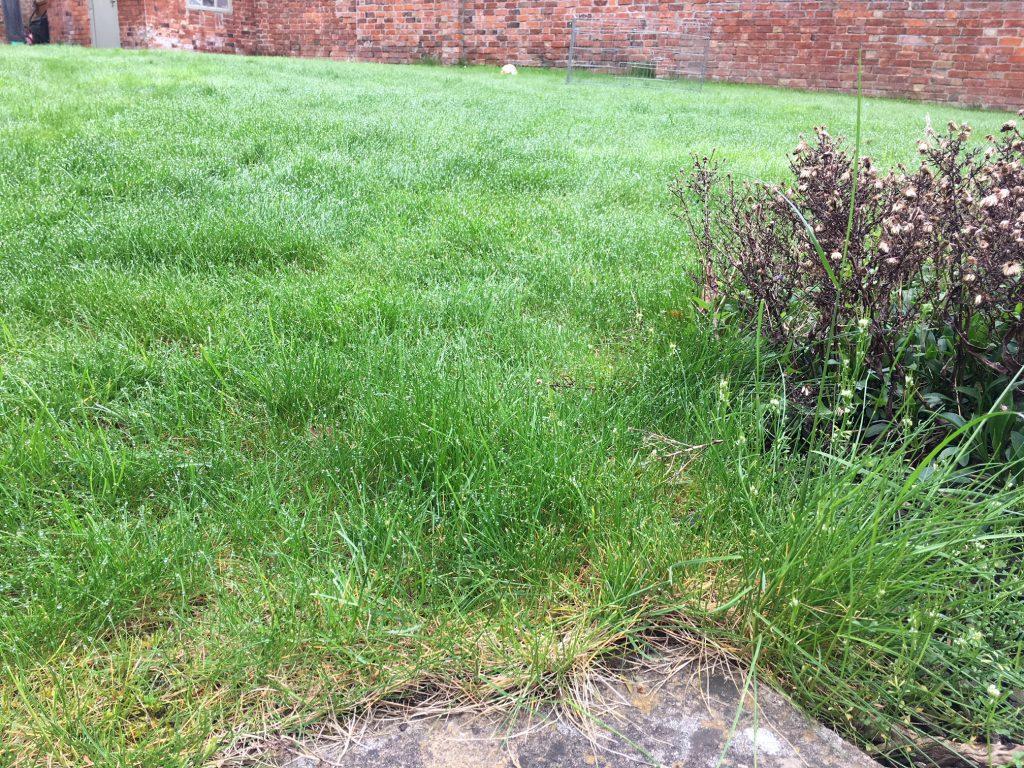 Grass, Garden, Getting the garden ready for spring