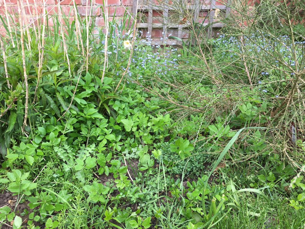Weeds, Garden, Getting the garden ready for spring