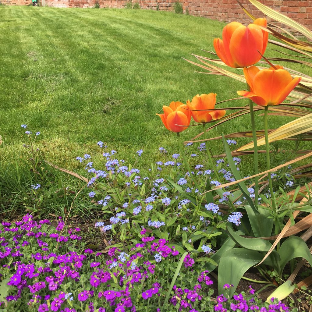 Garden, Flowers, Tulips, Spring, 365