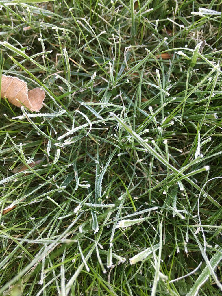 Frost, Garden, Spring, 365