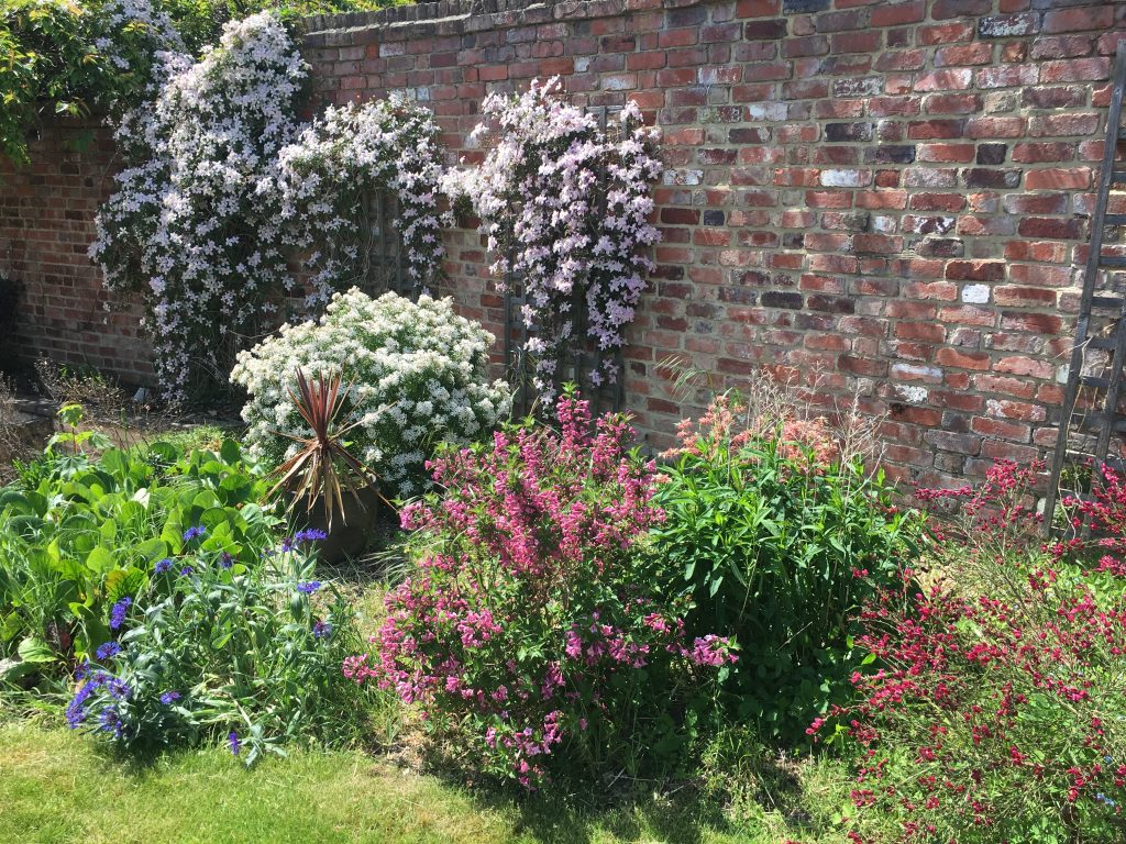 Garden, Flowers, Blossoms, 365, Spring