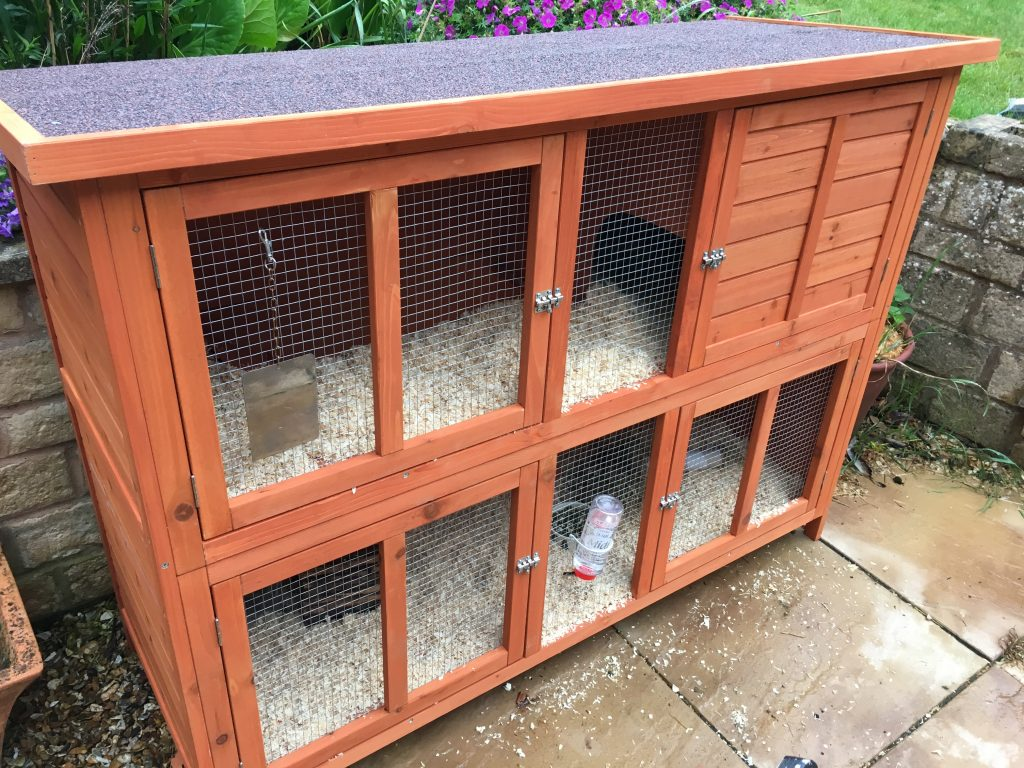 Guinea pig hutch, Guines pigs, Pets, 365