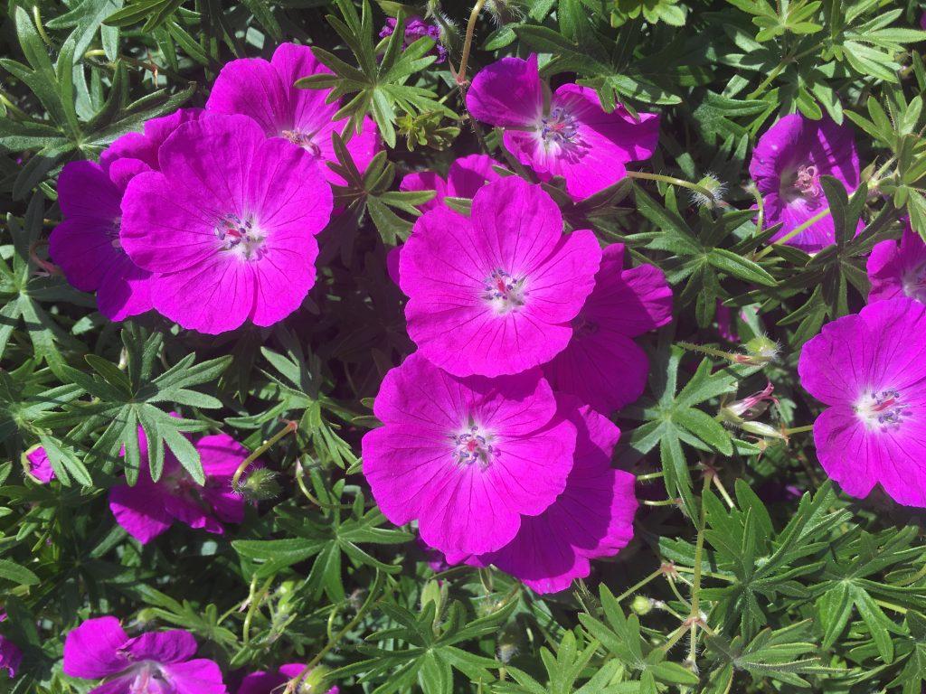 Flowers, Garden, Summer, 365