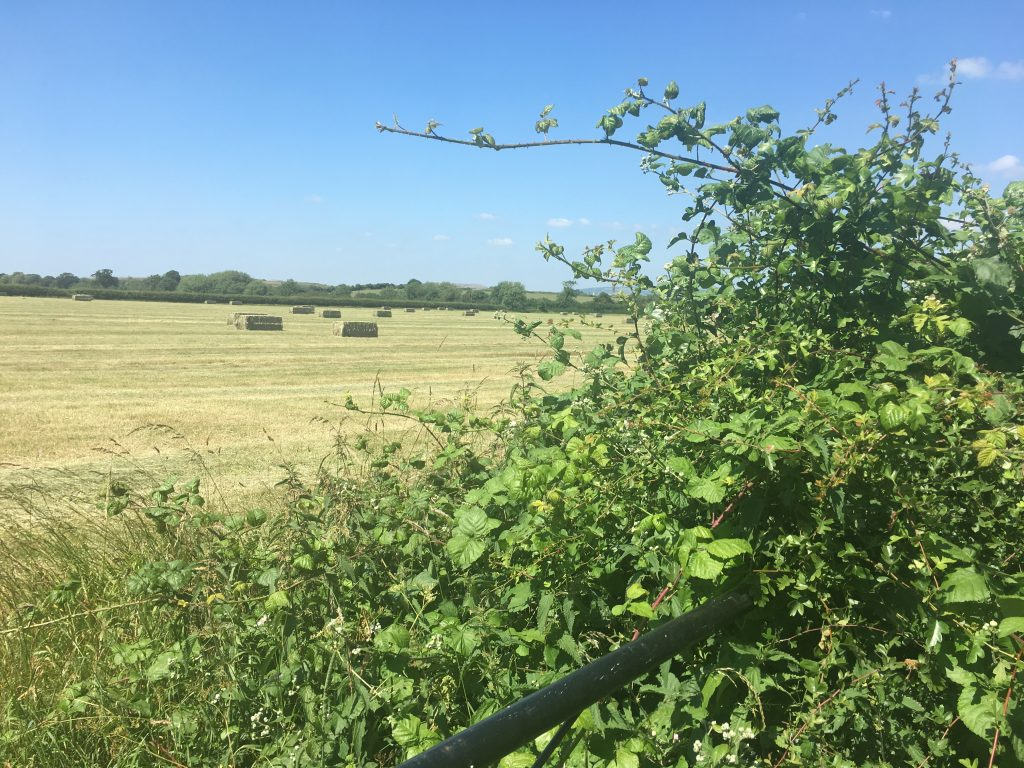 Countryside, English countryside, Summer, 365