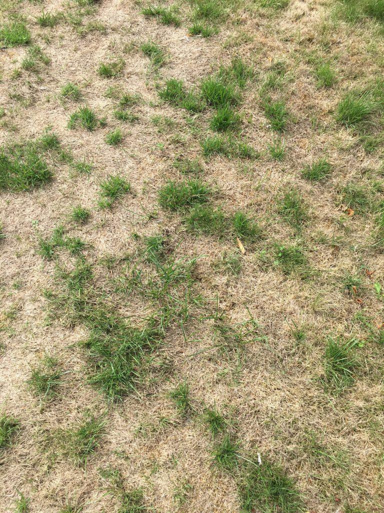 grass, garden, lawn, 365