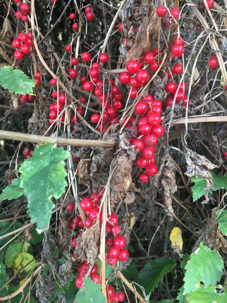 Hedgerow, Autumn, Silent Sunday, My Sunday Photo