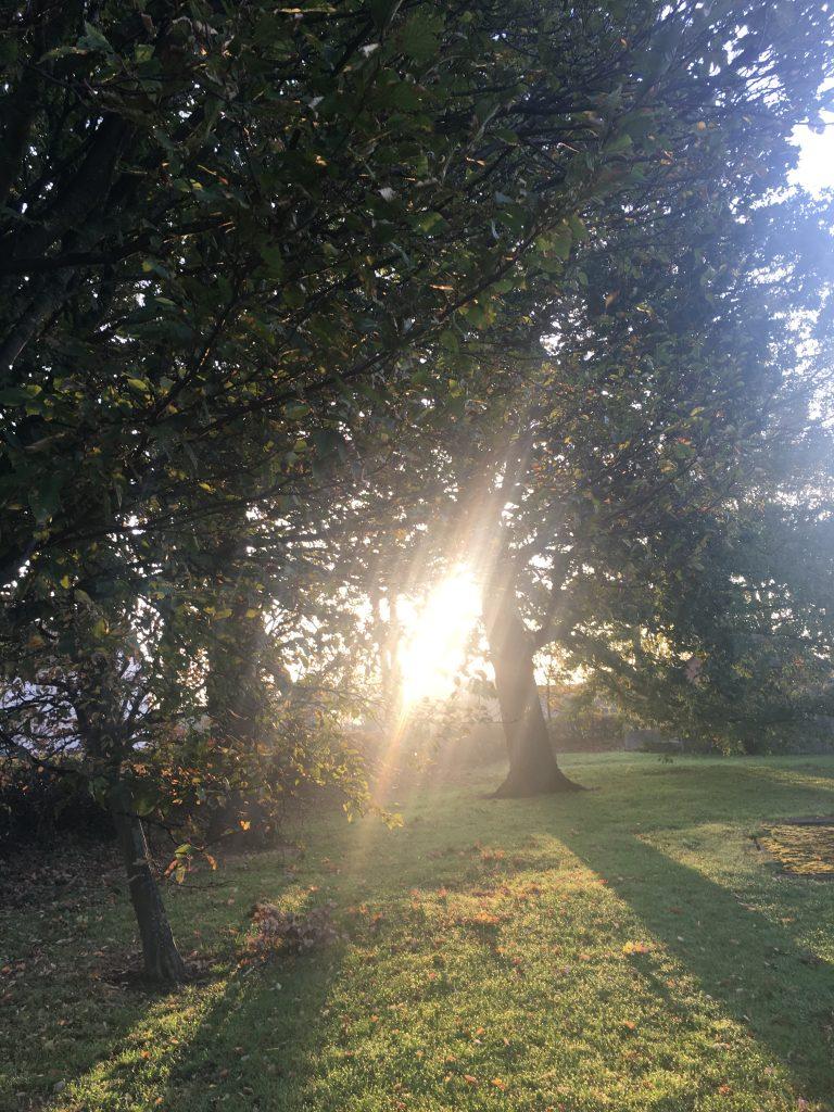 Autumn, Sunshine, 365
