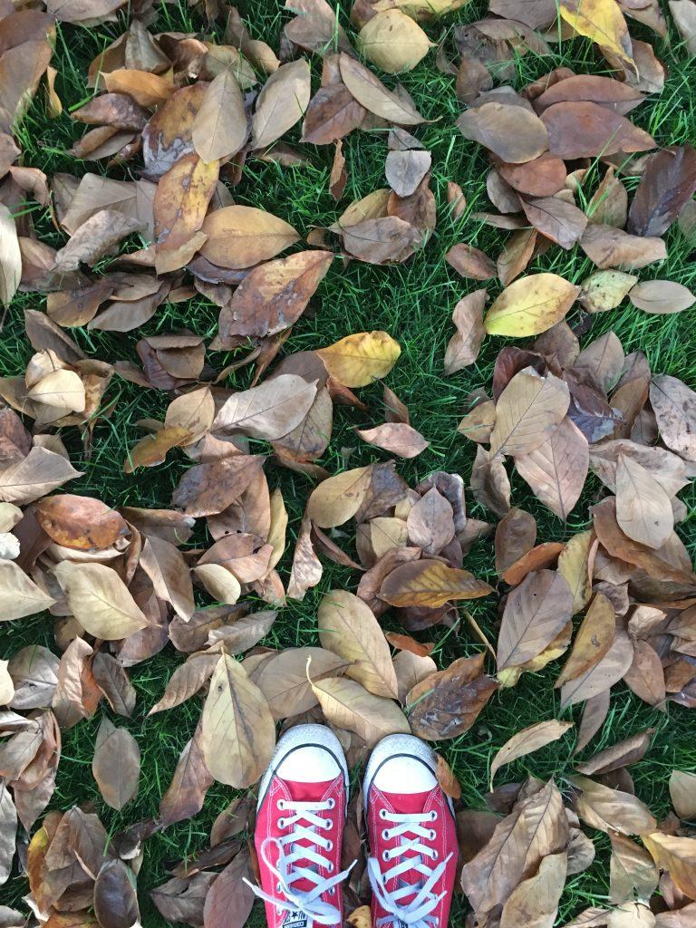 Leaves, Autumn, Garden, 365, Converse